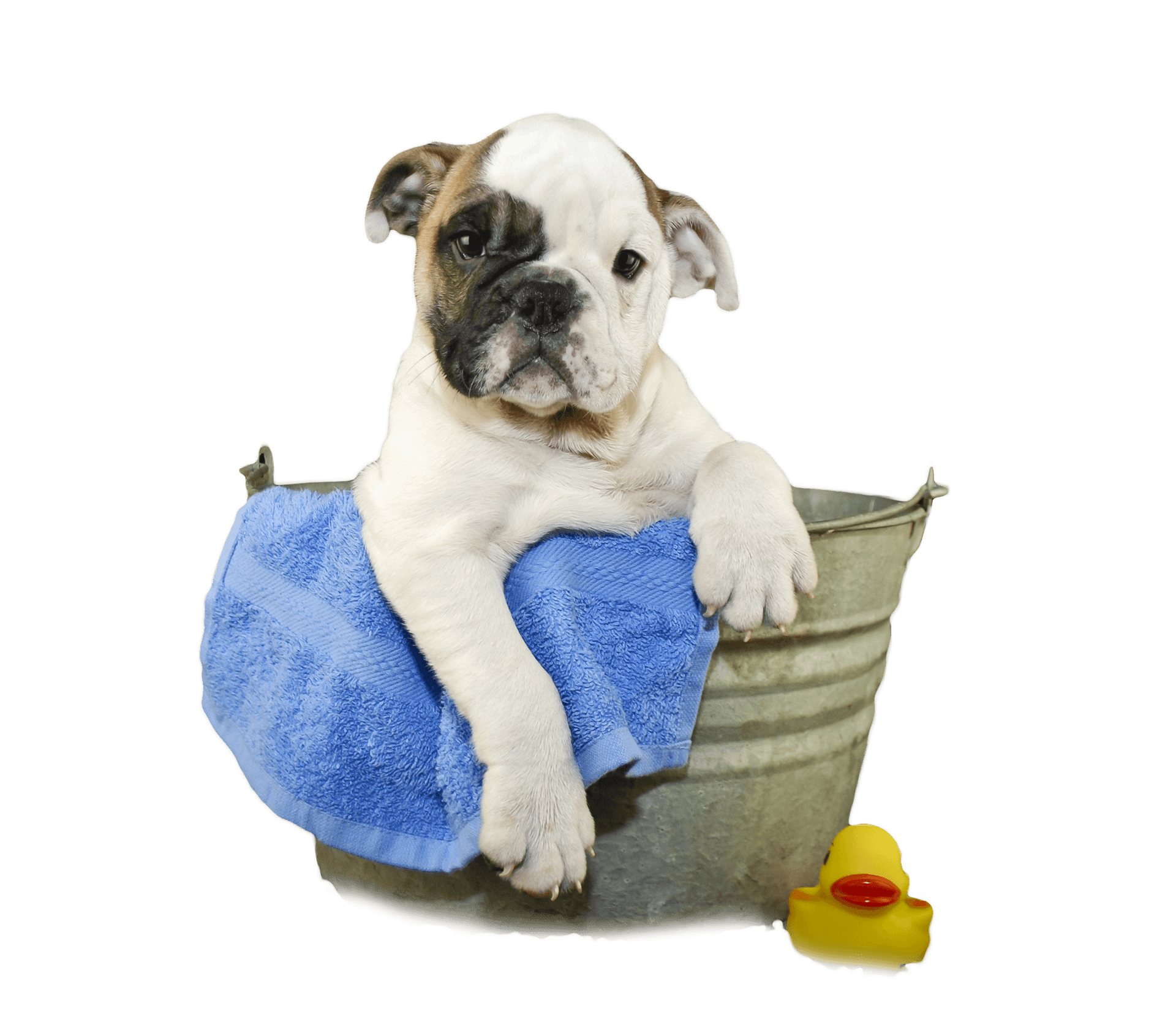 Welcome to alices pet parlor get your pet pampered today slide title solutioingenieria Image collections