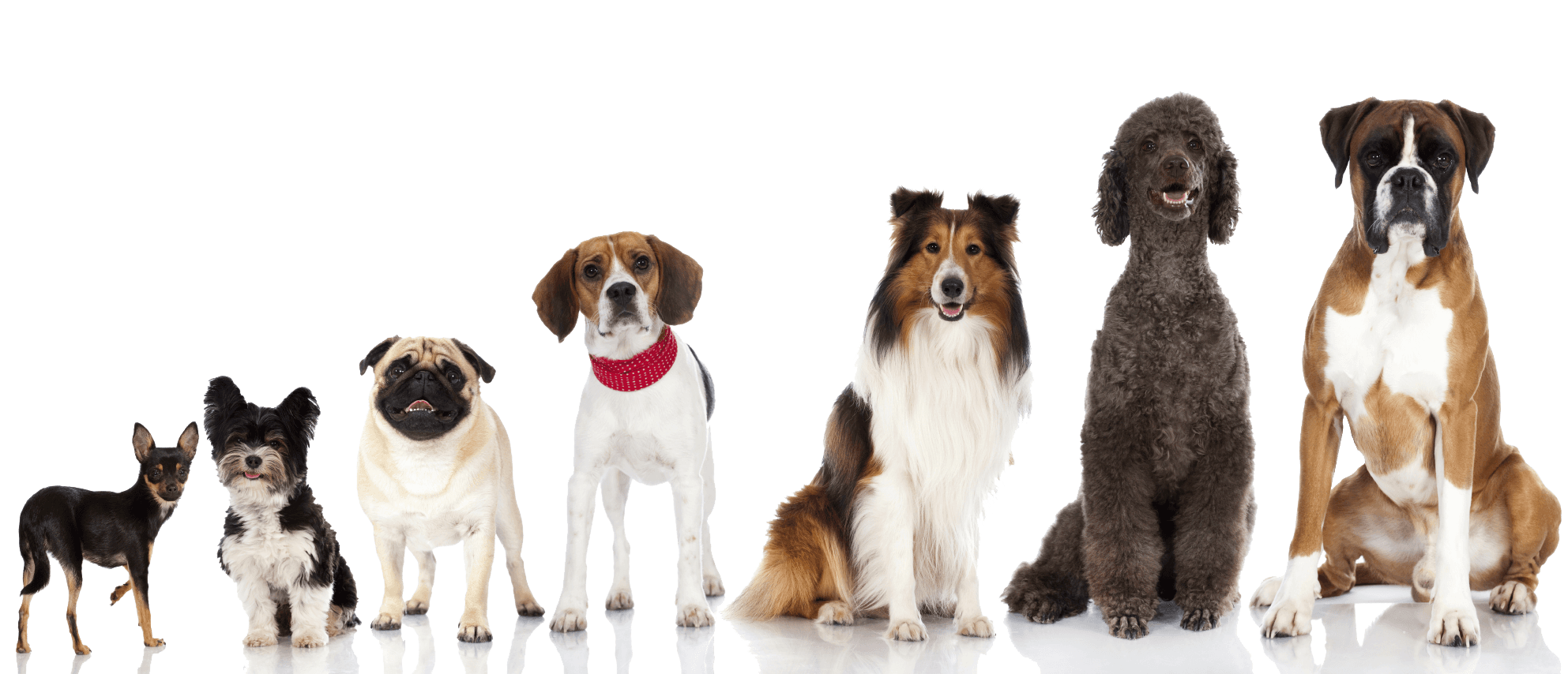 Welcome to alices pet parlor get your pet pampered today alices pet parlor midtown mutts solutioingenieria Image collections