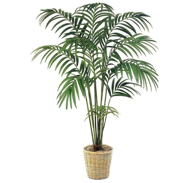 vendita piante e fiori