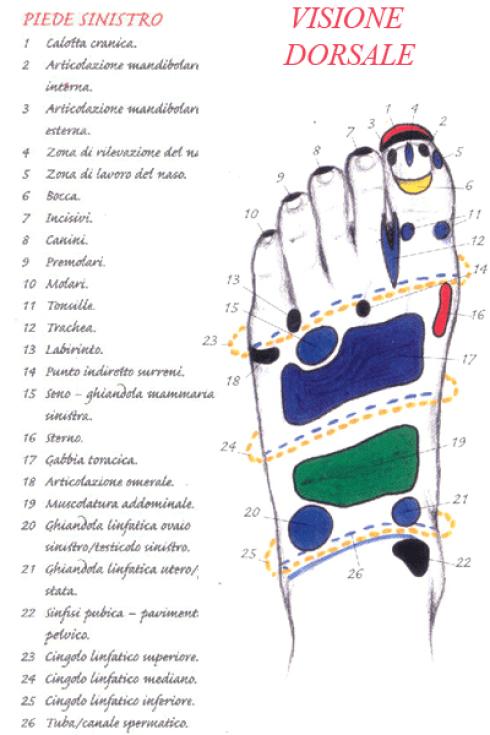 visione dorsale piede sinistro