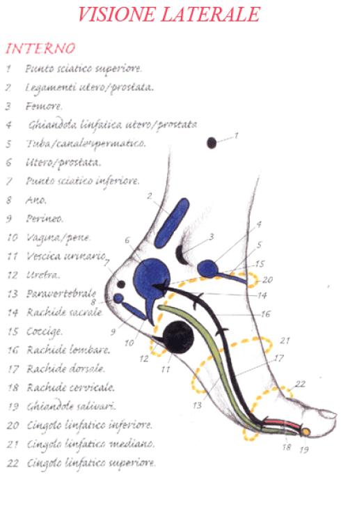 visione piede interno