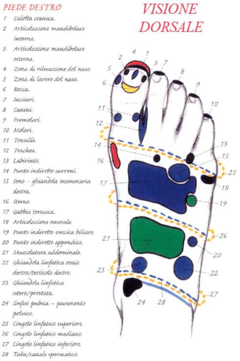 piede destro dorsale