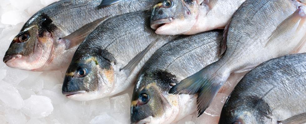 Spaccio pesce surgelato Arezzo