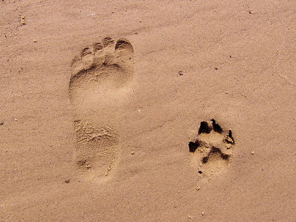 Footprint & Dogprint