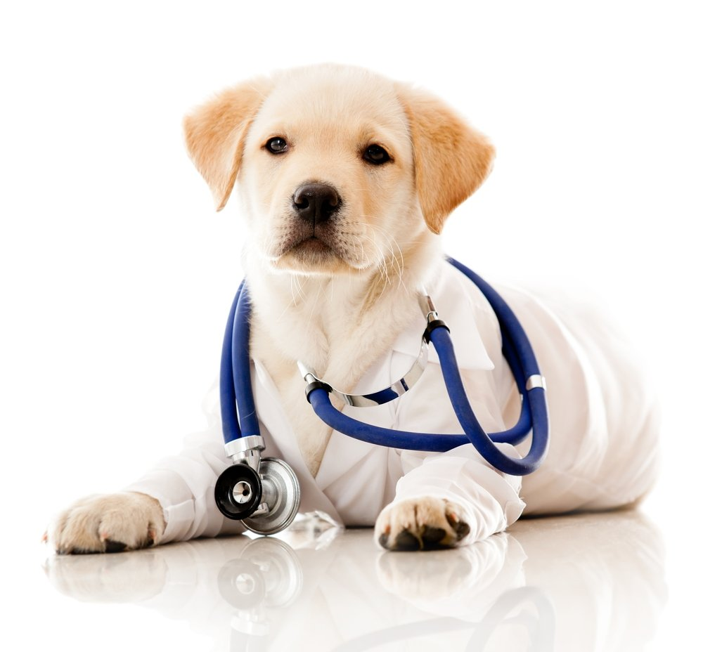 Pet vaccines at All Creatures