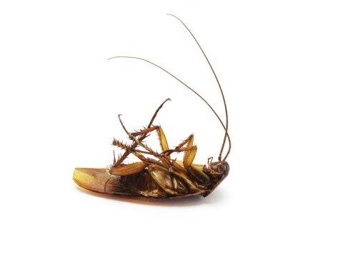 disinfestazioni scarafaggi Torino