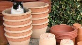 vasi in plastica, vasi in terracotta, vasi per piante