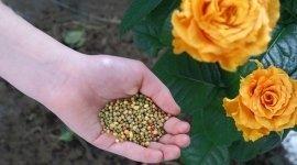 fertilizzanti, enzimi, estratti vegetali