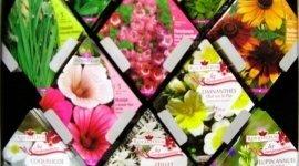 semi per fiori, semi per orto, piante da fiore