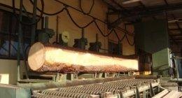 lavorazione tronchi
