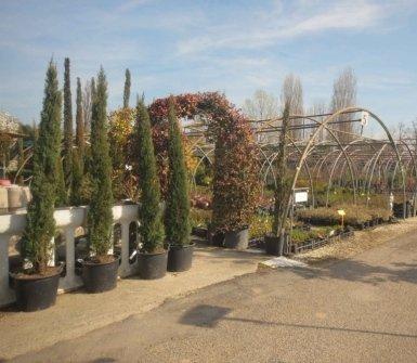vendita piante, manutenzione giardino, installazione di fiori