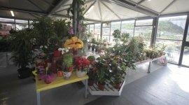 decorazioni a richiesta, decorazioni floreali, allestimento giardino