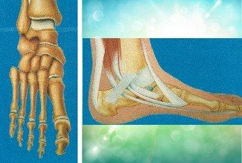 Illustrazione medica del piede