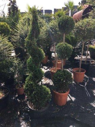 piante esportazione