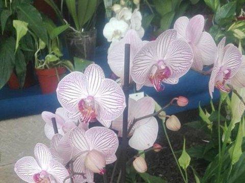 Vendita orchidee Messina