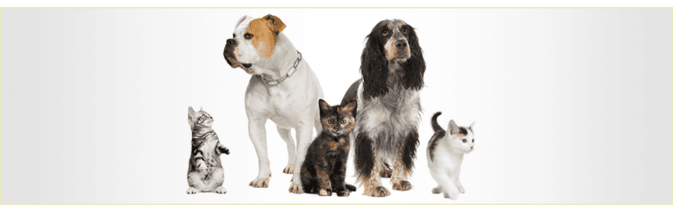 professional pet grooming services in pudsey. Black Bedroom Furniture Sets. Home Design Ideas