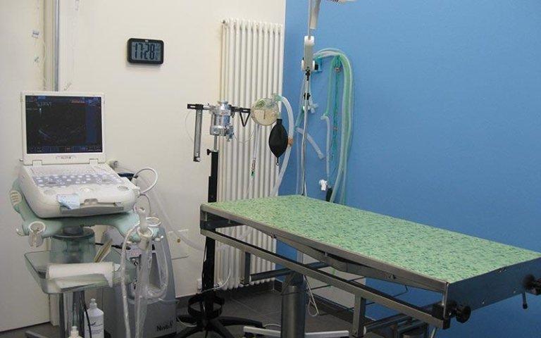 Chirugia veterinaria