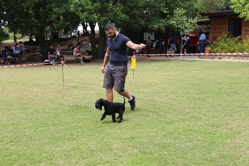 Gestione del cucciolo