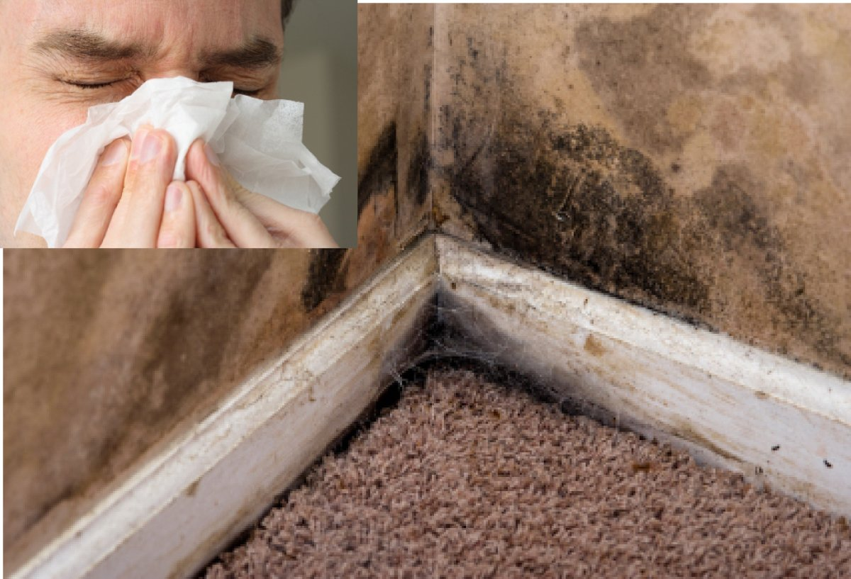 Moisture Problems That Can Lead To Black Mold