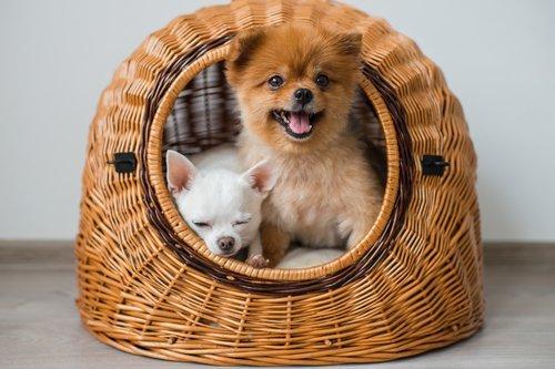 cuccia con cani