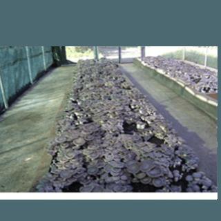 confezioni di substrato