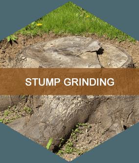 Stump Grinding Buffalo, NY