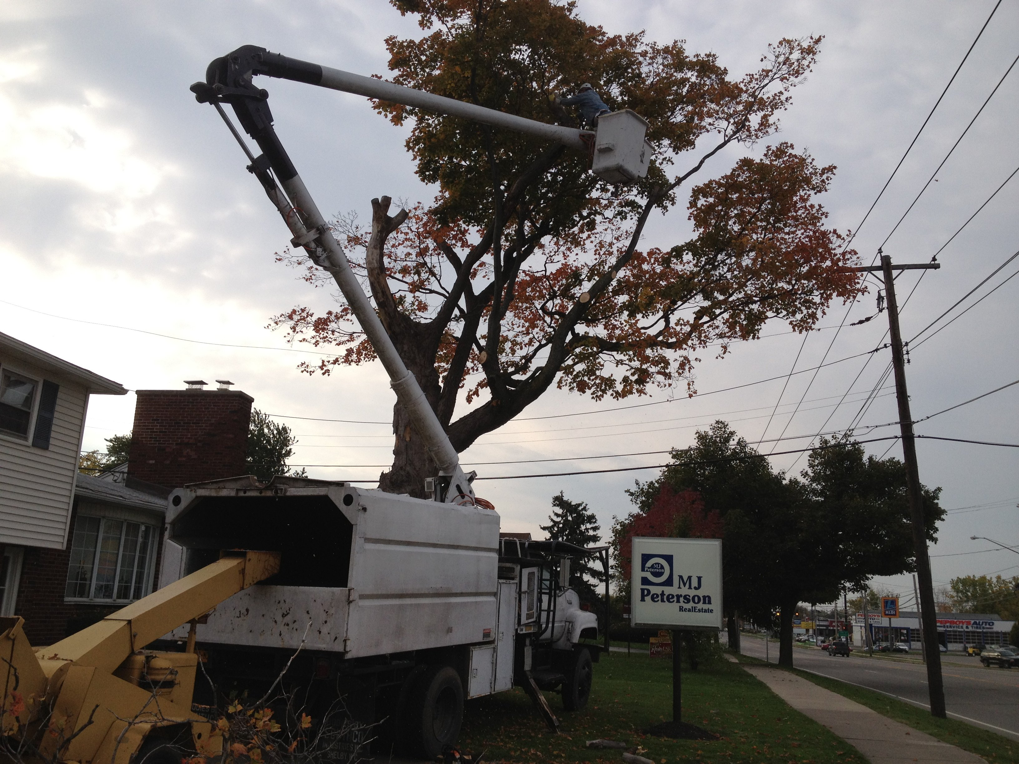 Residential Tree Services Buffalo, NY