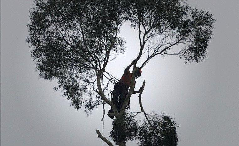 Tree specialists