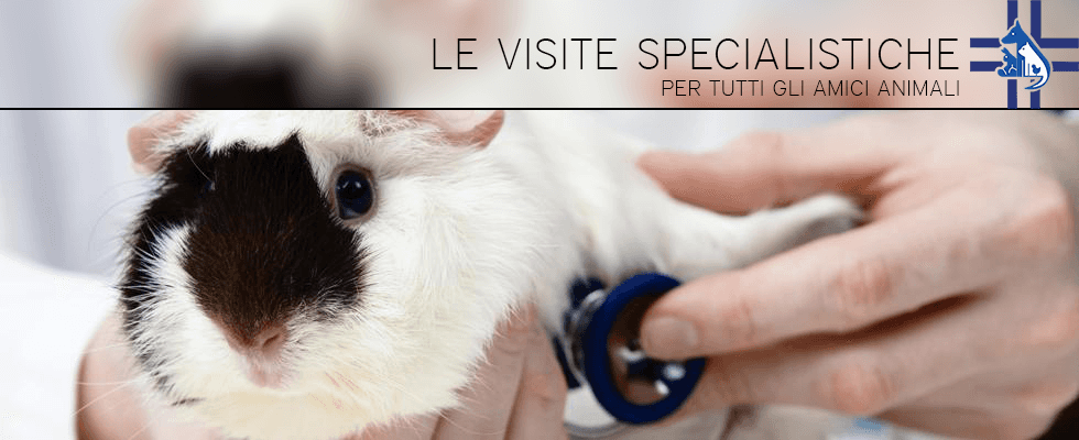 Clinica Veterinaria Croce di Gussago