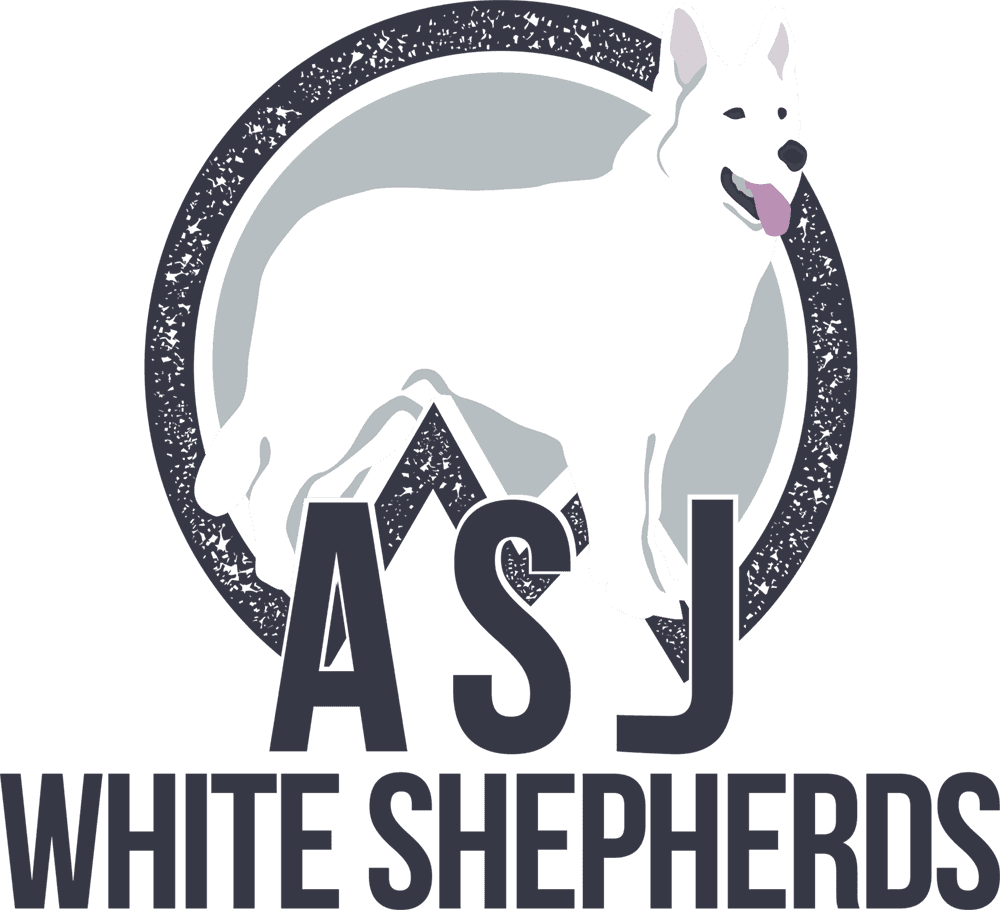 Asj White German Shepherds White German Shepherd Breeder Ct