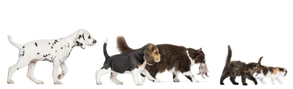Vendita accessori per animali