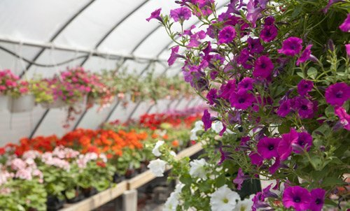 serra con piante a fiori di diverso colore