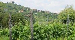 vino igp, realizzazione giardini, opere murarie giardini