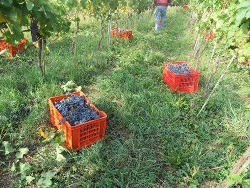 Casse di uva