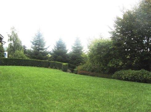 Cura aree verdi