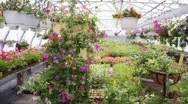 servizio giardinaggio