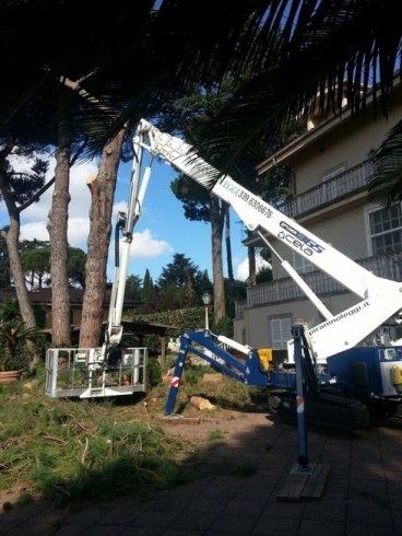 pulitura alberi alto fusto ragno 36 metri