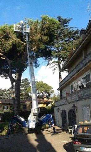 potatura alberi con ragno 36 metri