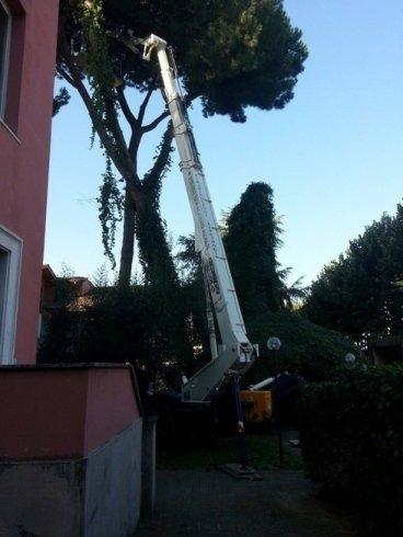 manutenzione alberi con ragno 36 metri