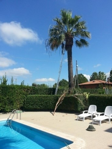 Potatura palme