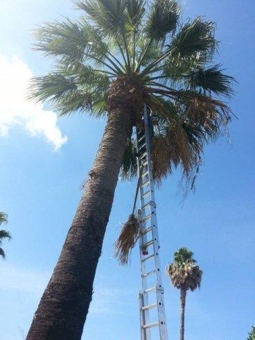 Scale allungabili per alberi alto fusto