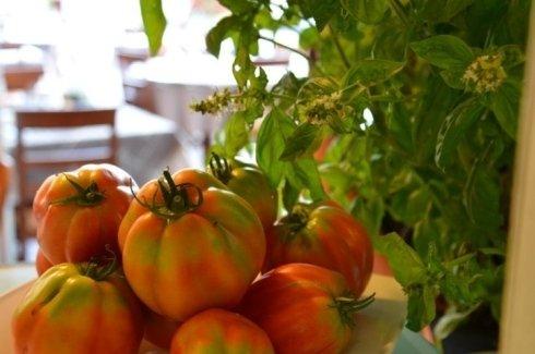 I nostri pomodori cuore di Bue
