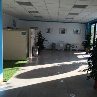 salone di ingresso della toelettatura self service per cani