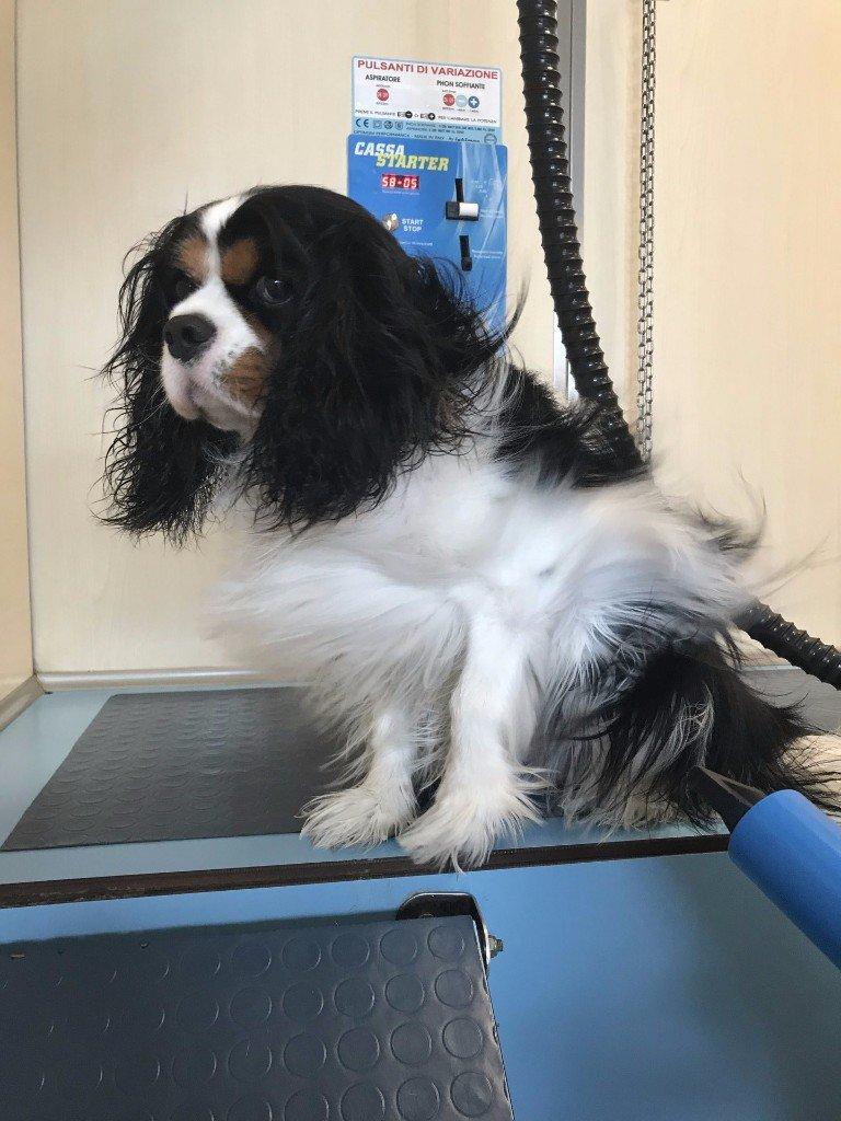 Padrone asciuga cane dopo il bagno