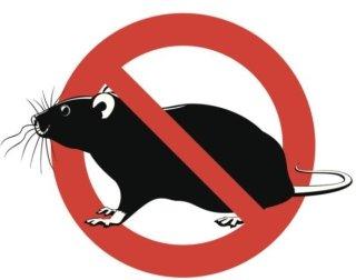 ratti, deratizzazione, disinfestazione ratti