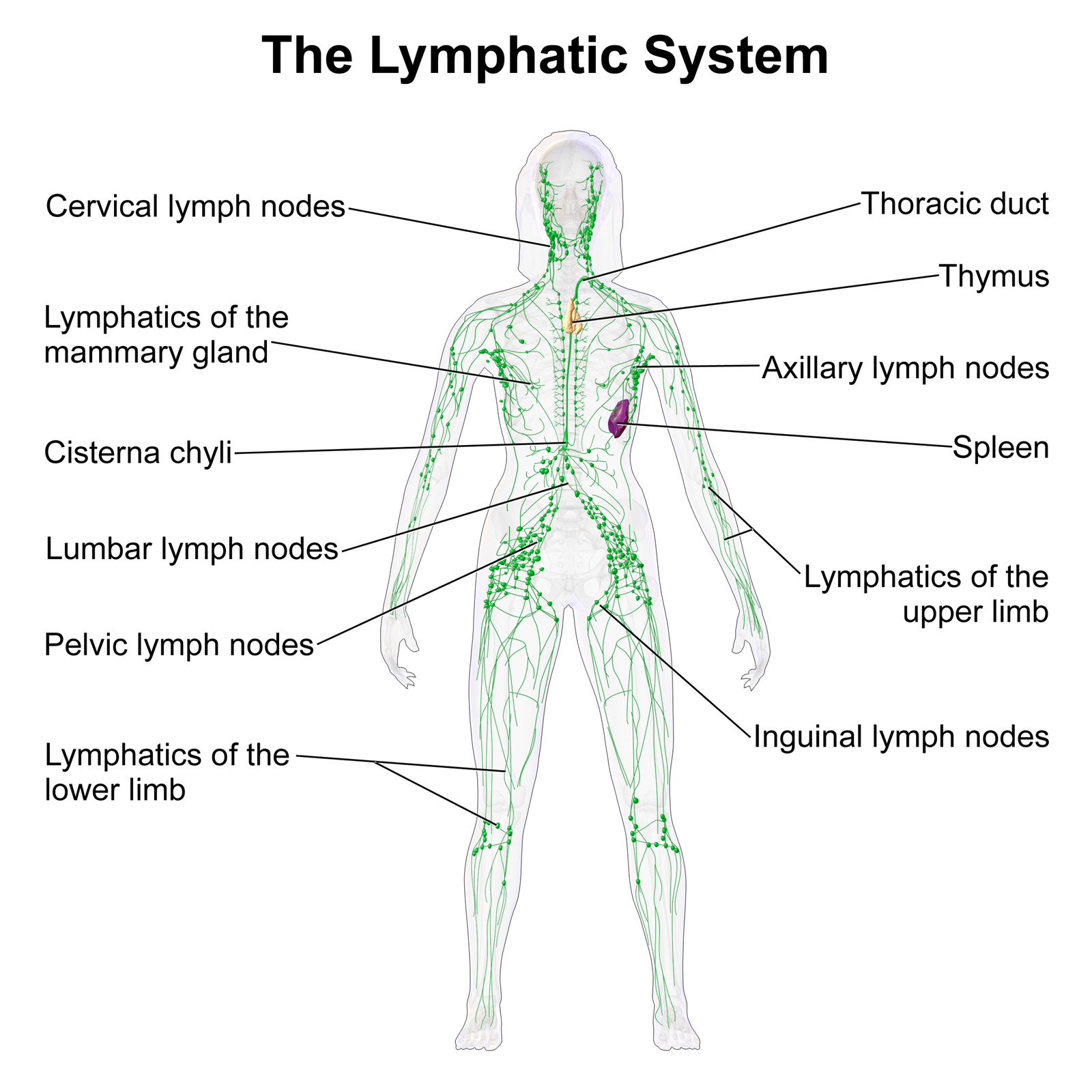 Foot massage manual lymphatic drainage pooptronica
