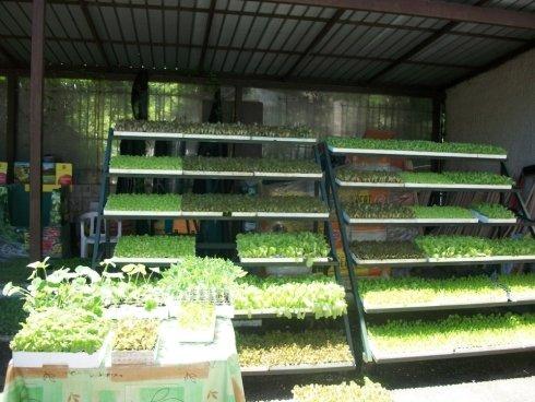 commercio piante