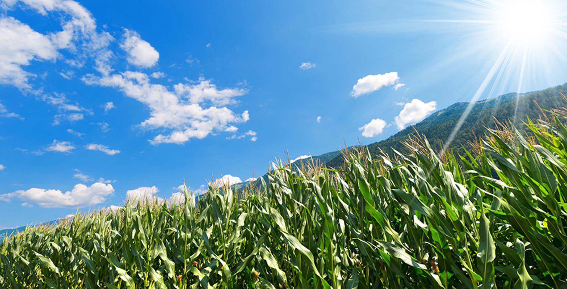 sostenibilità per l'ambiente
