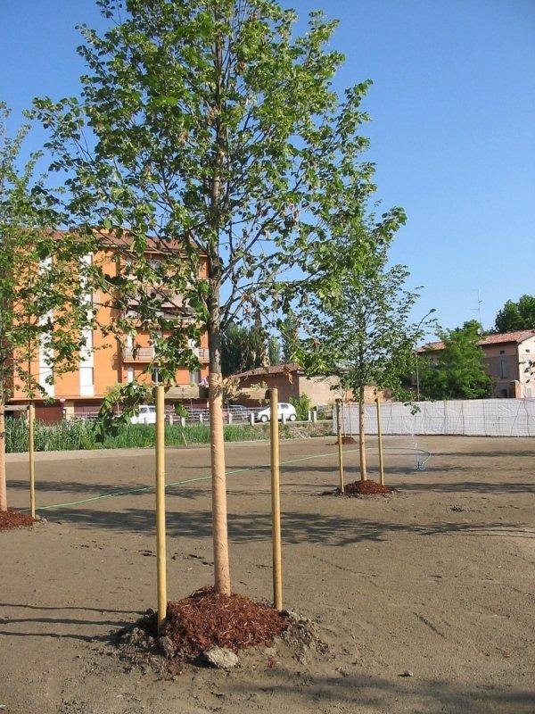 Creazione zone verdi pubbliche