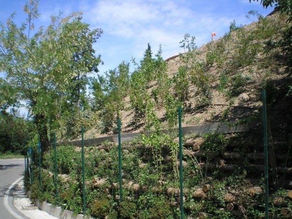Creazione di zone verdi su aree difficili